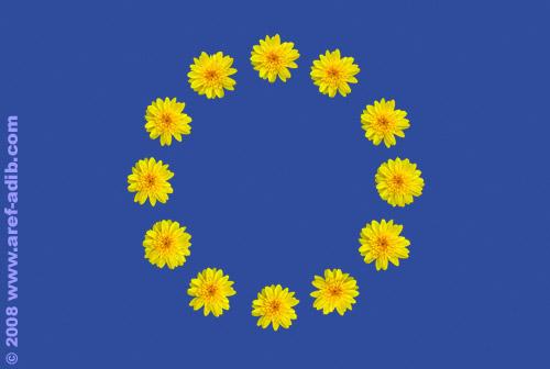 EUflag_daisy.jpg