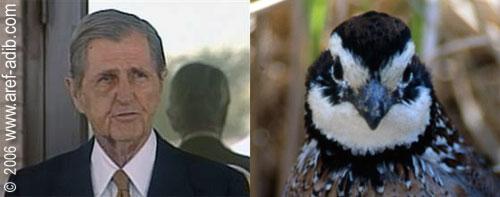 quailwhittington.jpg