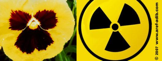 radioactivepansy.jpg