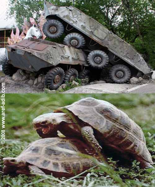 tanks_turtles.jpg